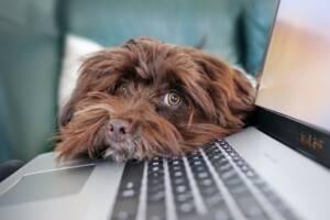 Chien avec un air dubitatif sur un clavier d'ordinateur